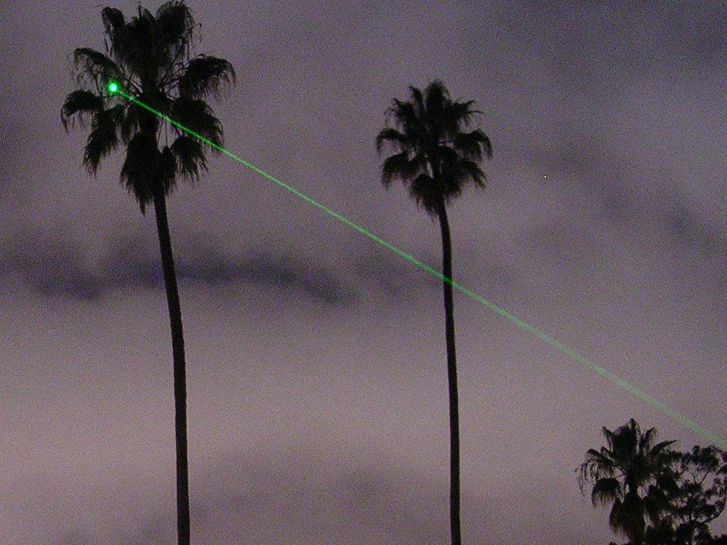 Green-lased-palm-tree-crop.jpg