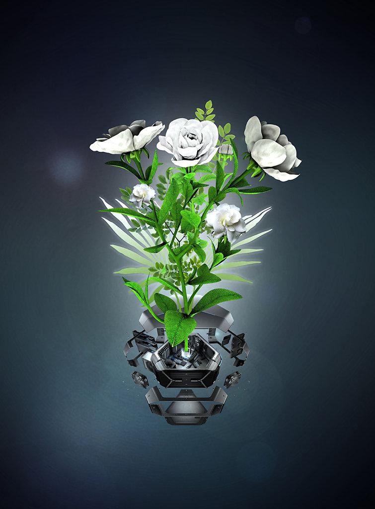 gardenia 4 delia